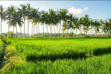 bhuwana_yoga_retreat_rice_fiely